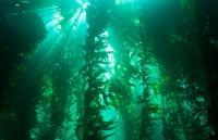 kelp's Photo