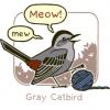 heygraycatbird